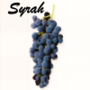 Understanding Syrah — PasoRobles